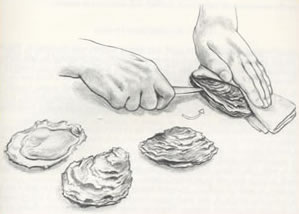 Detailed drawing of how to shuck an oyster